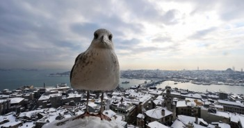 A-seagull-stands-on-Galata-Tower-in-Istanbul-on-January-9-2013.-Bulent-KilicAFPGetty-Images-960x639