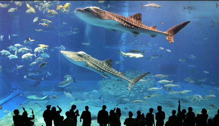 Aquarium Istanbul