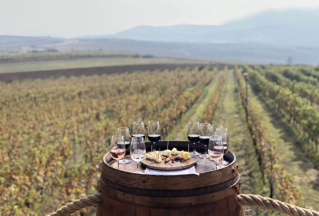 Vignobles de Barbare, Tekirdağ, Turquie